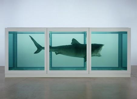 Requin plongé dans du formol