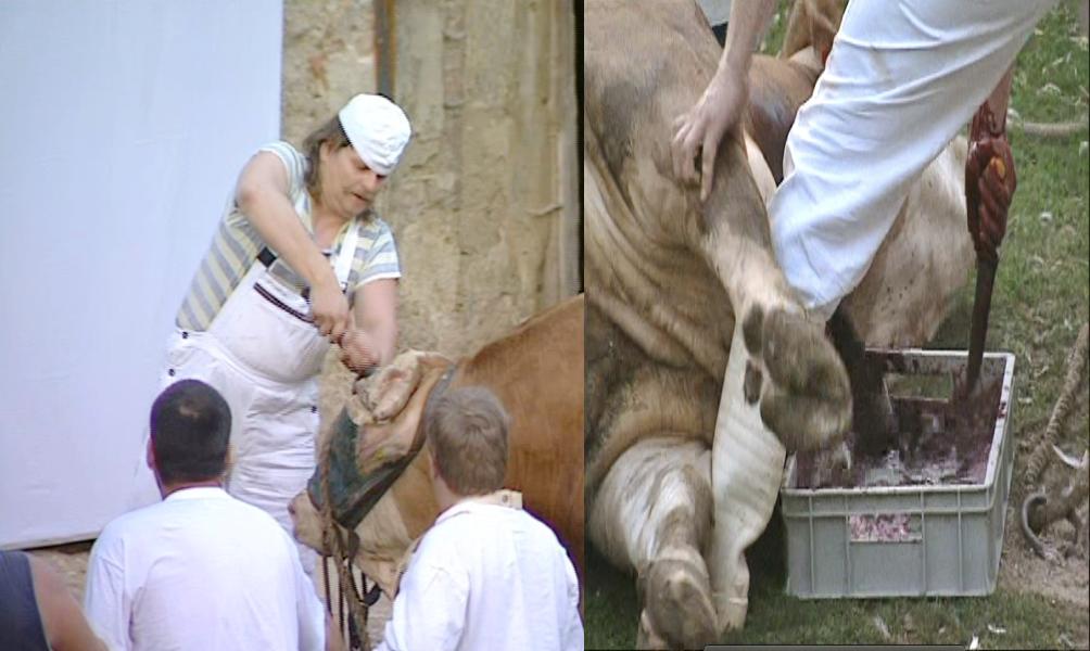 sacrifice du taureau Hermann Nistch